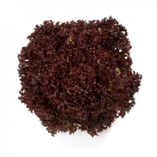 Семена салата Кармези : 5000 шт 36986039