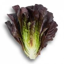 Семена салата Туринус : 5000шт