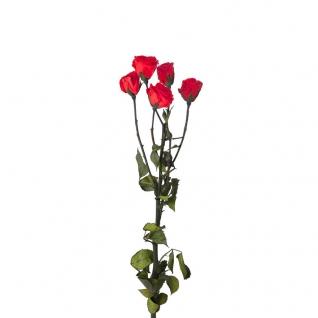 Кустовая Роза (5 бутонов на ветке, Ø3-3.5 cm) высота 40 cm Красный