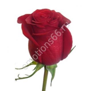 Роза Форевер 80 см