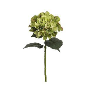 Гортензия FIEBIGER FLORISTIK 56см зеленый