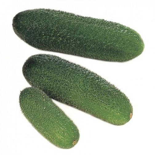 Семена огурца корнишона Гармония F1 - 1000шт 36986069