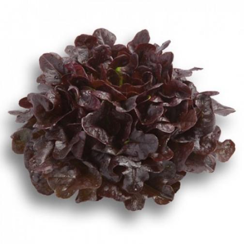 Семена салата Ксерафин : 5000 шт 36986088