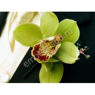 Бутоньерка с орхидеей