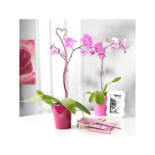 Опора декоративная для орхидей Soendgen, ежевичный