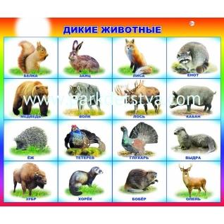 Плакат карт Дикие животные Алфея Леда