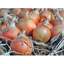 Семена лука репки Хилтон : 2гр