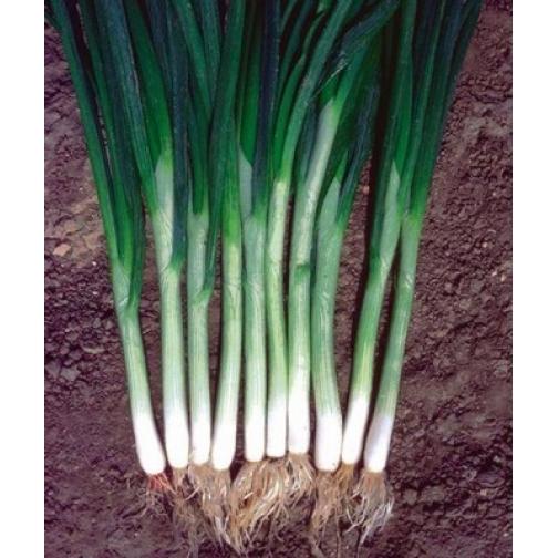 Семена лука на зелень Грин Баннер - 250 000шт 36986175