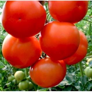 Семена томата Лилос F1: 5шт