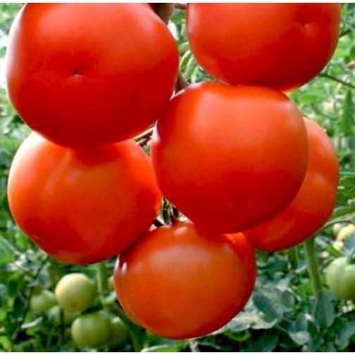 Семена томата Лилос F1: 5шт 36985977
