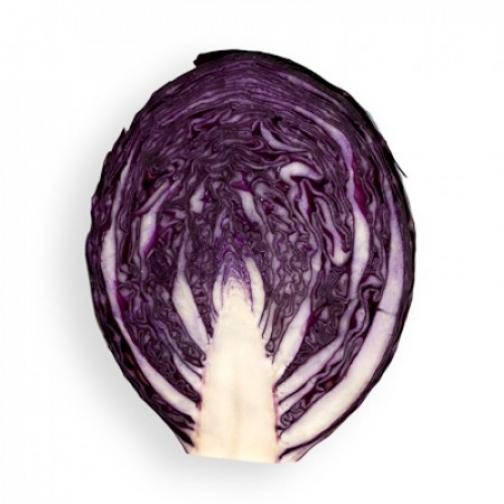 Семена капусты краснокочанной Родима F1 - 1000шт 36986230