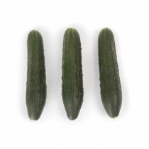 Семена огурца Святогор F1 - 1000шт