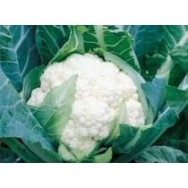Семена капусты цветной Спейс Стар F1 : 0,5гр